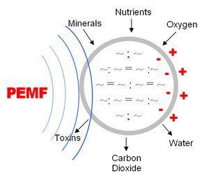 pemf-membrane